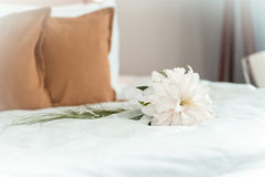 Beautiful bouquet of colorful flowers in interior. Of bedroom Stock Images