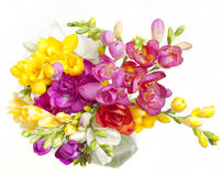Beautiful bouquet of colorful freesia Royalty Free Stock Photo