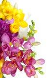 Beautiful bouquet of colorful freesia Stock Photo
