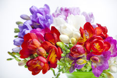 Beautiful bouquet of colorful freesia Stock Photography