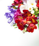 Beautiful bouquet of colorful freesia Royalty Free Stock Images