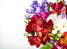 Beautiful bouquet of colorful freesia Stock Image