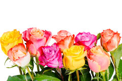 Beautiful bouquet colorful rose flowers with dew is isolated on Stock Photography