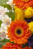 Beautiful bouquet of colorful spring flowers. Stock Images