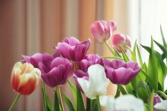 Beautiful bouquet of tulips stock image
