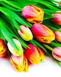 Beautiful bouquet of colorful tulips. Royalty Free Stock Photography