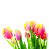 Beautiful bouquet of colorful tulips. Royalty Free Stock Photo