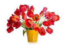 Beautiful bouquet of colorful tulips Stock Photos