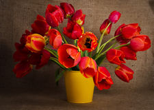 Beautiful bouquet of colorful tulips Stock Photography