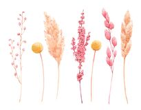Free Beautiful Bouquet Composition With Watercolor Herbarium Wild Dried Grass In Pink And Yellow Colors. Stock Illustration. Stock Images - 171008424