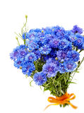 Beautiful bouquet of cornflowers  isolated Stock Photography