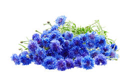 Beautiful bouquet of cornflowers isolated on white background. Beautiful bouquet of cornflowers isolated on white royalty free stock image