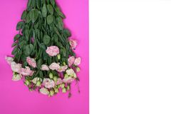 A bouquet of lisianthus. A beautiful bouquet of creamy pink and white lisianthus, flat lay, top view on vivid pink and white backgound with copy space, card Stock Images
