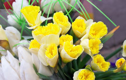 Beautiful bouquet of daffodils. Royalty Free Stock Photo