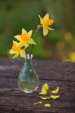 Beautiful bouquet of daffodils. On the table Stock Photography