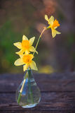 Beautiful bouquet of daffodils. On the table Royalty Free Stock Photo
