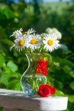 Beautiful bouquet of daisies Royalty Free Stock Images