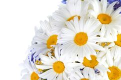 Beautiful bouquet of daisies in vase Royalty Free Stock Images