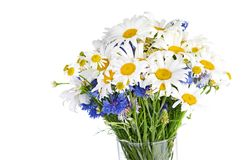 Beautiful bouquet of daisies in vase Royalty Free Stock Photography