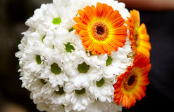 Beautiful bouquet of daisies. Bouquet of white and orange daisies Stock Photos