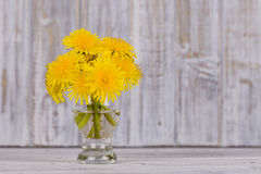 Beautiful bouquet of dandelion flower on a white wooden background Stock Image
