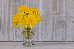 Beautiful bouquet of dandelion flower on a white wooden background Royalty Free Stock Image
