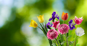 Beautiful bouquet of different flowers on a blurred background Stock Photo