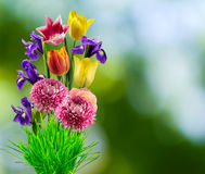 Beautiful bouquet of different flowers on a blurred background Royalty Free Stock Images