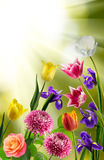 Beautiful bouquet of different flowers on a blurred background Royalty Free Stock Photo