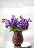 Beautiful bouquet of field violets. In a vase Stock Image