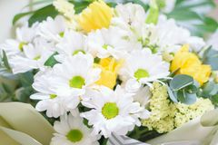 Beautiful bouquet of flowers, daisies close-up with blurred background royalty free stock photography
