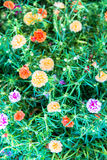 Beautiful bouquet flowers Royalty Free Stock Photos