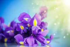 Beautiful bouquet of flowers irises Stock Image