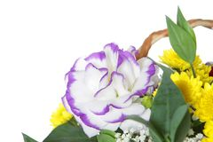 Beautiful bouquet of flowers over white Royalty Free Stock Photos