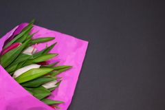 Beautiful bouquet of fresh white and red tulips covered with pink paper on black background. Great gift for Valentine`s Day and stock photography