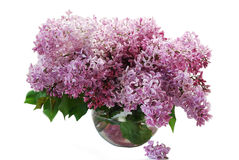 Beautiful bouquet of a gentle spring lilac flowers isolated on a pink background Stock Photography