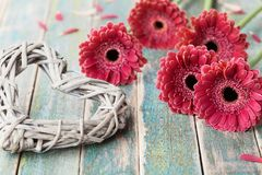 Beautiful bouquet from gerbera daisy flowers with wicker heart for womans or mother day on wooden vintage background. Spring greeting card concept Royalty Free Stock Photos