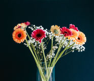 Beautiful bouquet of Gerbera flowers in glass vase against gray Royalty Free Stock Photo