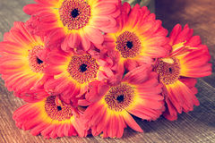 Beautiful bouquet of gerbera flowers Royalty Free Stock Photo