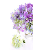 Beautiful bouquet of hydrangeas Stock Images