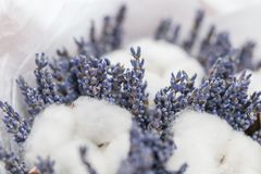 Beautiful bouquet lavender and cotton, on table . dried flowers white and lilac color.  stock photos