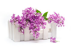 Beautiful bouquet of lilac in a decorative vase Stock Photo