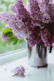 Beautiful bouquet of lilacs. Blooming in vase Stock Image
