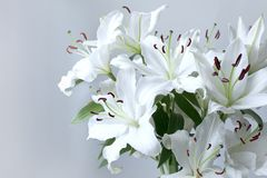 Beautiful bouquet of lilies on a grey background Royalty Free Stock Photos