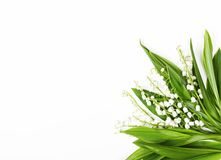 Beautiful bouquet of lilies of the valley isolated on white background. Top view. Flat lay. Beautiful bouquet of lilies of the valley isolated on white Stock Images
