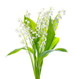 Beautiful bouquet of lily the valley flower is isolated on white Stock Image