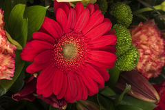 Beautiful bouquet of many colorful flowers with red on the top Stock Images