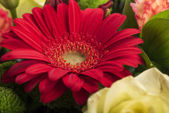 Beautiful bouquet of many colorful flowers with red on top Stock Photography