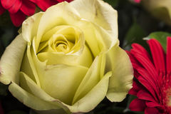 Beautiful bouquet of many colorful flowers with yellow rose on top Stock Image