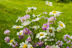 Beautiful bouquet of native  summer flowers. Beautiful bouquet of native flowers, such as daisy, annual fleabane and another purple flower that I have not Stock Image